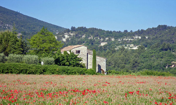 In the Luberon countryside