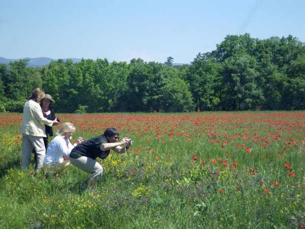 Photo taking in the poppies