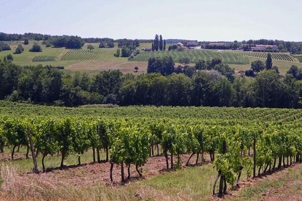 Vineyards near Bergerac