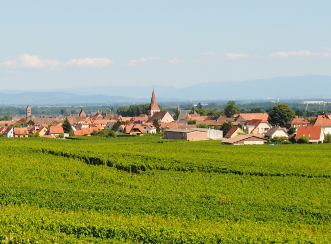 Our village of Kientzheim, set among the vines