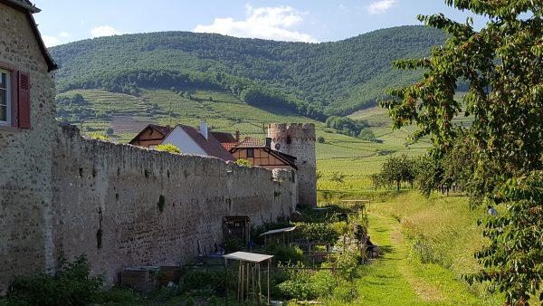Kientzheim, Alsace Experience