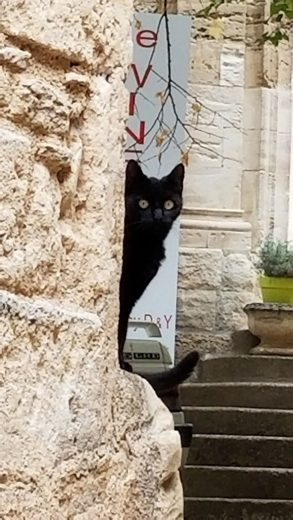 Bonnieux cat, Luberon Experience