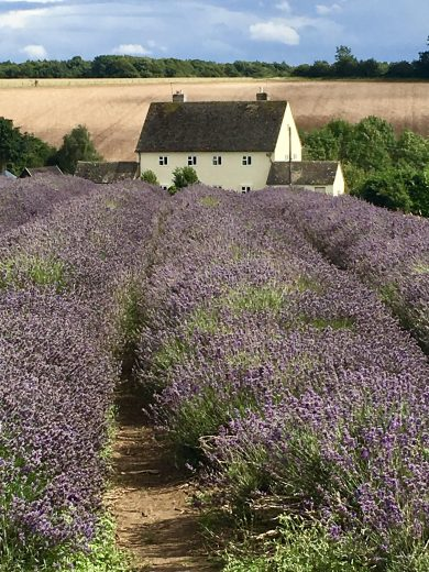 Cotswold Lavender, Cotswolds Experience