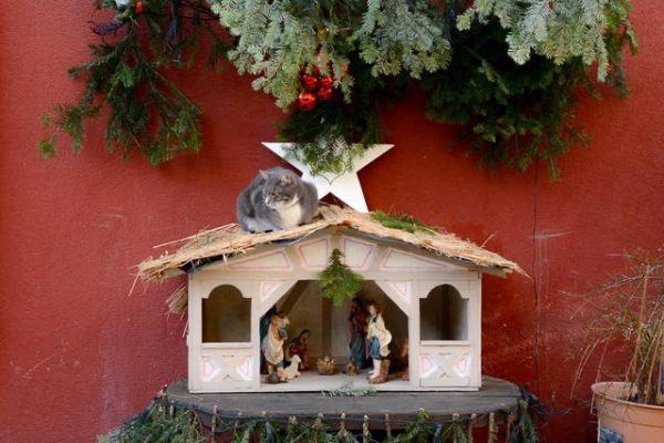 Bergheim creche and cat, European Christmas Experience
