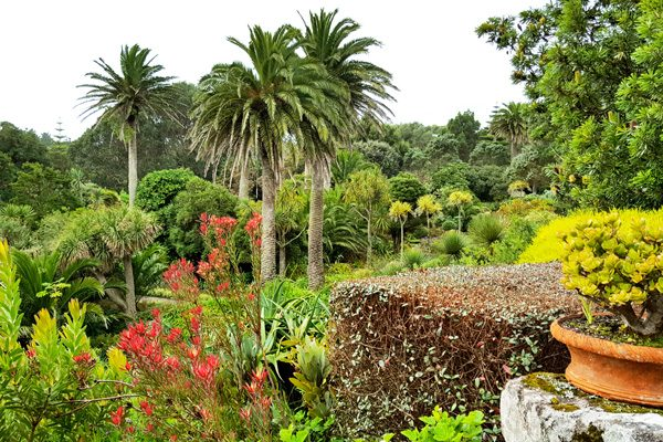 Tresco Abbey Garden - The Cornwall Experience