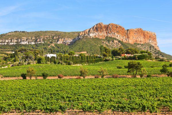 vineyards below cliffs